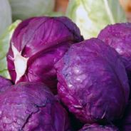 Cabbage Cabeza Negra 3 Red - Appx 2000 seeds